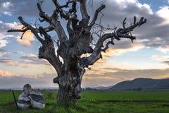 Árbol de muerte Fotografía de archivo libre de regalías