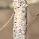 Árbol de muerte en naturaleza Fotografía de archivo libre de regalías