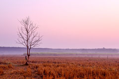 Árbol de muerte solo en el amanecer fotos de archivo libres de regalías