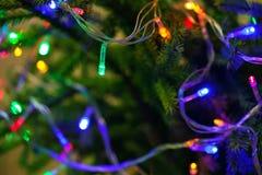 Árbol de navidad adornado con las guirnaldas, primer Foto de archivo libre de regalías