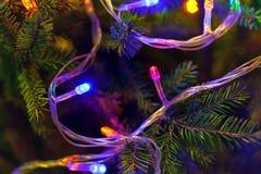 Árbol de navidad adornado con las guirnaldas, primer Imagenes de archivo