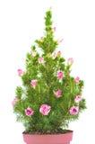 Árbol de navidad adornado con los capullos de rosa Imagen de archivo