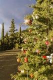 Árbol de navidad adornado en el bosque Fotos de archivo