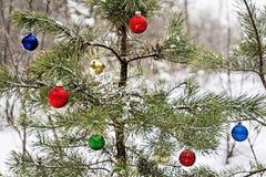 Árbol de navidad adornado en un bosque nevoso del pino Imagen de archivo libre de regalías
