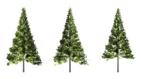 Árbol de navidad aislado en el fondo blanco con la trayectoria de recortes imágenes de archivo libres de regalías