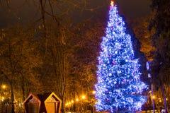 Árbol de navidad azul grande en el parque en la noche Foto de archivo