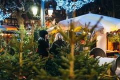 Árbol de navidad de compra para la celebración Fotos de archivo libres de regalías
