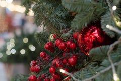 Árbol de navidad con las bayas del acebo como la decoración y luces con el espacio de la copia en fondo borroso del bokeh en alam Fotos de archivo libres de regalías