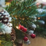 Árbol de navidad con las bayas del acebo como la decoración y luces con el espacio de la copia en fondo borroso del bokeh en alam Imagen de archivo libre de regalías