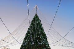 Árbol de navidad con las guirnaldas instaladas en Vilna por la tarde Fotos de archivo