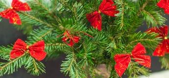 Árbol de navidad con los arqueamientos rojos Foto de archivo libre de regalías