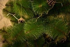 Árbol de navidad con los conos y la guirnalda del pino Imágenes de archivo libres de regalías