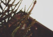 Árbol de navidad con los juguetes Foto de archivo