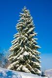 Árbol de navidad con nieve Foto de archivo