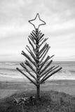 Árbol de navidad de la madera de deriva, playa de Pouaua, Gisborne, Nueva Zelanda imágenes de archivo libres de regalías