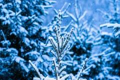 Árbol de navidad 5 de la nieve del invierno Foto de archivo libre de regalías