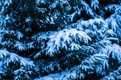Árbol de navidad 4 de la nieve del invierno Foto de archivo