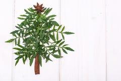 Árbol de navidad de Minimalistic hecho de la planta de jardín en los tableros blancos Fotografía de archivo libre de regalías