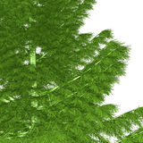 Árbol de navidad descubierto listo Imagen de archivo