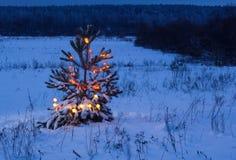 Árbol de navidad en bosque de la noche Fotografía de archivo