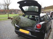 Árbol de navidad en coche Imagenes de archivo
