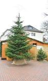 Árbol de navidad en el centro de ciudad justo Foto de archivo libre de regalías