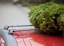Árbol de navidad en la azotea del coche fotografía de archivo libre de regalías