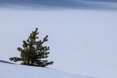 Árbol de Navidad en la nieve Imagen de archivo