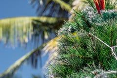 Árbol de navidad en un fondo de una palmera La Navidad en el concepto de las zonas tropicales Imagen de archivo libre de regalías