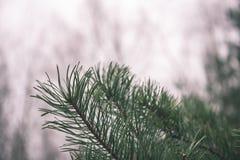 árbol de navidad festivo en el fondo verde - mirada de la película del vintage Foto de archivo libre de regalías