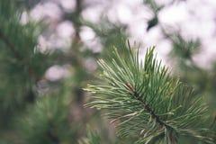árbol de navidad festivo en el fondo verde - mirada de la película del vintage Imagen de archivo libre de regalías