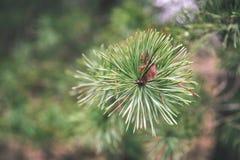 árbol de navidad festivo en el fondo verde - mirada de la película del vintage Fotografía de archivo