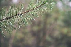árbol de navidad festivo en el fondo verde - mirada de la película del vintage Imágenes de archivo libres de regalías