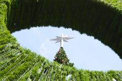 Árbol de navidad grande Fotos de archivo libres de regalías