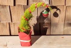 Árbol de navidad minúsculo Fotos de archivo libres de regalías