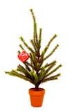 Árbol de navidad miniatura Fotos de archivo
