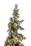 Árbol de navidad nevado con conos Fotos de archivo