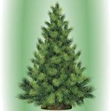 Árbol de navidad por Año Nuevo Imágenes de archivo libres de regalías
