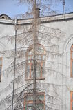Árbol de navidad secado Fotos de archivo libres de regalías