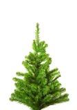 Árbol de navidad sin la decoración Imagen de archivo libre de regalías