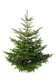 Árbol de navidad sin los ornamentos fotos de archivo