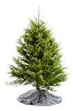 Árbol de navidad verdadero Undecorated fotografía de archivo libre de regalías