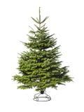 Árbol de navidad verde joven Foto de archivo libre de regalías