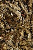 Árbol de navidad y luces en las tonalidades del vintage, fondo Imagen de archivo libre de regalías