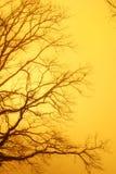 Árbol de oro del otoño Foto de archivo libre de regalías