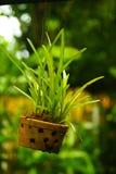 Árbol de orquídea Fotos de archivo