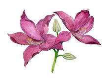 Árbol de orquídea púrpura Fotos de archivo