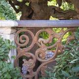 Árbol de pagoda japonesa con la verja oxidada del metal viejo Imagen de archivo libre de regalías