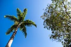 Árbol de palmas en una playa del Caribe hermosa en Key West Imagen de archivo