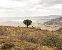 Árbol de paraguas en el borde del cráter de Ngorongoro Foto de archivo libre de regalías